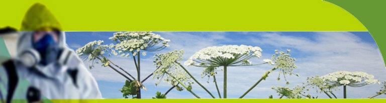 Уничтожение борщевика и прочей нежелательной растительности