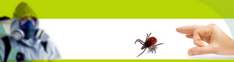 Цены на уничтожение насекомых и грызунов